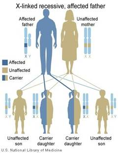 http://www.bravecommunity.com/images/conditions/fabry-x-linked-recessive-inheritance-father.jpg