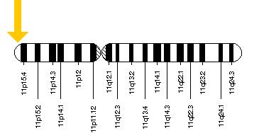 The KCNQ1 gene is located on the short (p) arm of chromosome 11 at position 15.5.