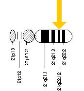 The KCNE1 gene is located on the long (q) arm of chromosome 21 at position 22.12.